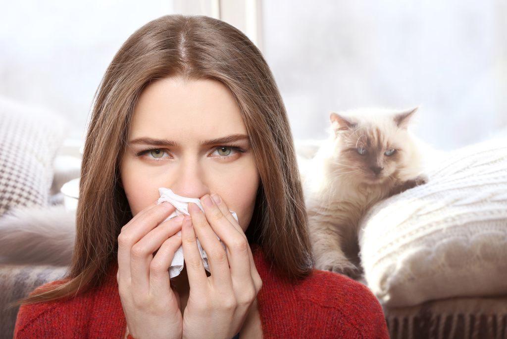 Eine Katzenallergie sollte man nicht unterschätzen
