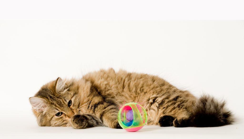 Hat eine Katze genügend Spielsachen, kaut sie normalerweise nicht an anderen Gegenständen