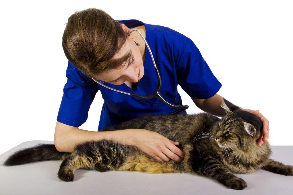 Nicht schön, aber nötig: der Tierarztbesuch