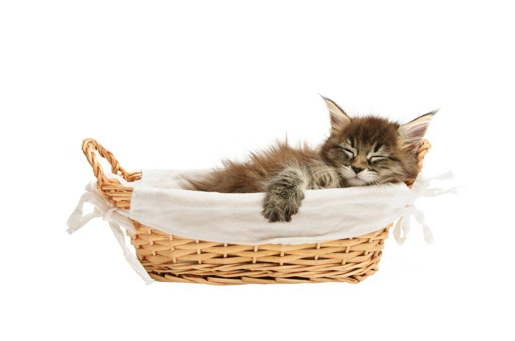 Ein kuscheliger Schlafplatz muss auch sein