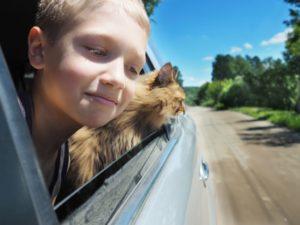 So genießen die wenigsten Katzen eine Autofahrt