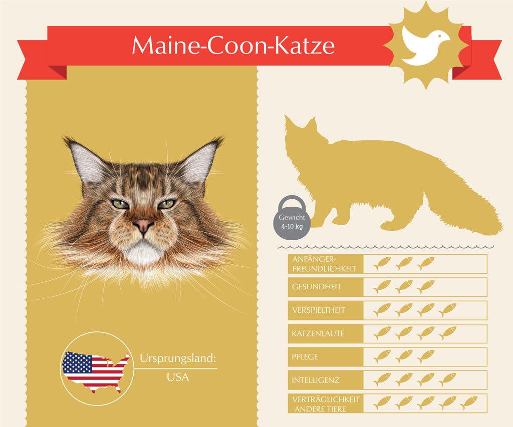 Die Maine Coon im Überblick