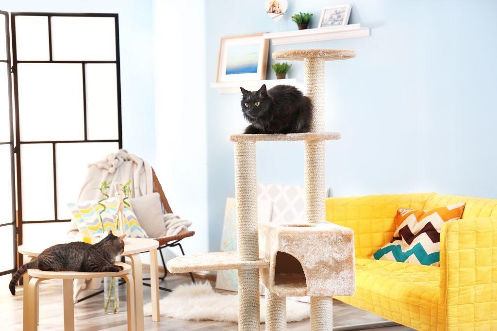 Die passenden Räumlichkeiten spielen eine große Rolle bei der Katzenzucht