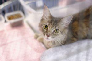 Die meisten Katzenpensionen bieten eine liebevolle Betreuung an