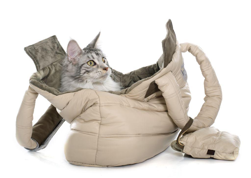 Nicht jede Katze hat Spaß daran, in den Urlaub zu fahren